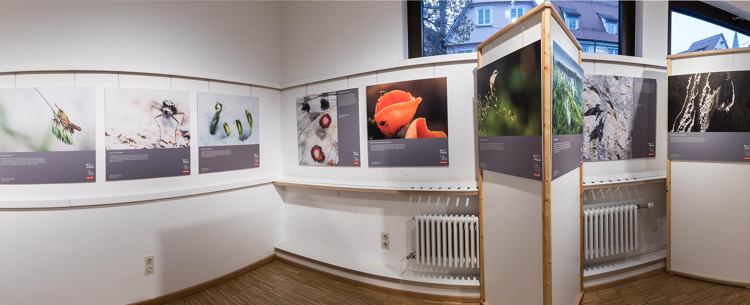 """Die Sonderausstellung """"Wilde Alb"""" ist noch bis zum 29. März im Naturkundlichen Bildungszentrum Ulm zu sehen.  (Foto: G. Schenk)"""