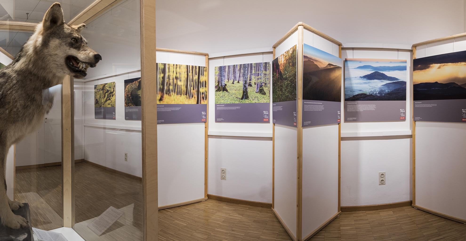 Die Fotoausstellung im Naturkundlichen Bildungszentrum Ulm wird durch originale Tierpräparate bereichert.  (Foto: G. Schenk)
